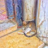 γάτα της Σαουδικής Αραβίας makkah 2015 Στοκ Εικόνες