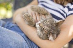 Γάτα της Pet που απολαμβάνει την αγκαλιά στοκ εικόνα