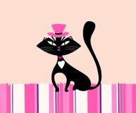 Γάτα της Pet στοκ εικόνες με δικαίωμα ελεύθερης χρήσης