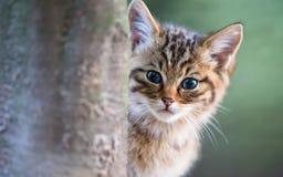 Γάτα τιγρών Στοκ φωτογραφία με δικαίωμα ελεύθερης χρήσης