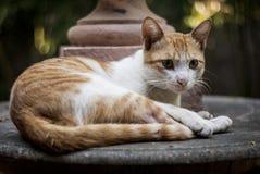 Γάτα τον Οκτώβριο Shenzhen, Κίνα Στοκ Φωτογραφία