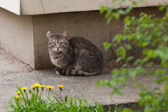 Γάτα το αυτί που γυρίζουν με Στοκ φωτογραφία με δικαίωμα ελεύθερης χρήσης