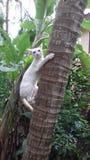 Γάτα Το καλύτερο κατοικίδιο ζώο Στοκ Φωτογραφίες