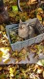 Γάτα το φθινόπωρο Στοκ φωτογραφίες με δικαίωμα ελεύθερης χρήσης