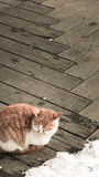 Γάτα το χειμώνα Στοκ Φωτογραφία