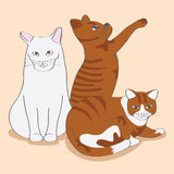 Γάτα τρία χαριτωμένη Στοκ Φωτογραφίες