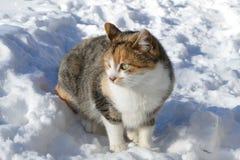 Γάτα τρία χρώματα Στοκ φωτογραφία με δικαίωμα ελεύθερης χρήσης
