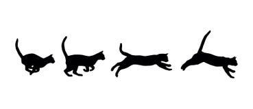 Γάτα τρεξίματος Στοκ Εικόνες
