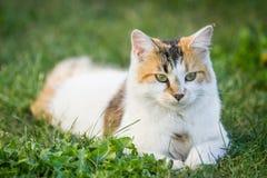 γάτα υπαίθρια Στοκ εικόνες με δικαίωμα ελεύθερης χρήσης