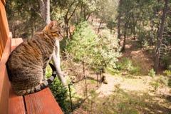 γάτα υπαίθρια Στοκ Φωτογραφίες