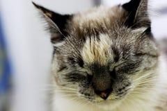 γάτα λυπημένη Στοκ εικόνα με δικαίωμα ελεύθερης χρήσης