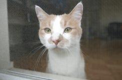 γάτα λυπημένη στοκ φωτογραφίες