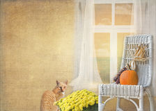 γάτα φθινοπώρου Στοκ φωτογραφία με δικαίωμα ελεύθερης χρήσης
