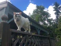 Γάτα φωτογραφιών στοκ εικόνες