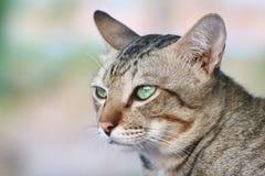 Γάτα χαριτωμένη, γατών προσώπου στενός επάνω γατών ματιών πορτρέτου όμορφος Στοκ Φωτογραφία