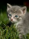 γάτα χαριτωμένη λίγα Στοκ φωτογραφία με δικαίωμα ελεύθερης χρήσης