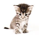 γάτα χαριτωμένη Στοκ εικόνα με δικαίωμα ελεύθερης χρήσης