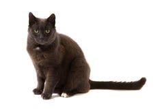 γάτα χαριτωμένη Στοκ Εικόνες