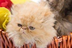 γάτα χαριτωμένη Στοκ Φωτογραφία