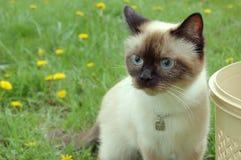 γάτα χαριτωμένη Στοκ φωτογραφία με δικαίωμα ελεύθερης χρήσης