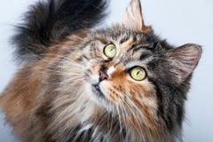 γάτα χαριτωμένη στοκ φωτογραφίες