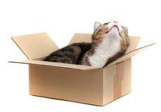 γάτα χαρτοκιβωτίων λίγα Στοκ φωτογραφίες με δικαίωμα ελεύθερης χρήσης