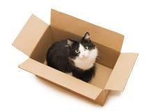 γάτα χαρτονιού μαύρων κου&ta Στοκ Φωτογραφίες
