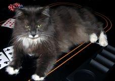 γάτα χαρτοπαικτικών λεσχώ στοκ φωτογραφία με δικαίωμα ελεύθερης χρήσης