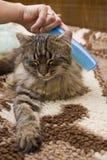 γάτα χαϊδεμένη Στοκ Εικόνα