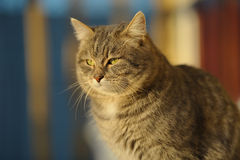 γάτα χνουδωτή Στοκ Φωτογραφίες
