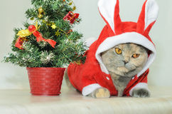 Γάτα Χριστουγέννων που ντύνει επάνω στο κόκκινο κοστούμι κουνελιών Στοκ φωτογραφία με δικαίωμα ελεύθερης χρήσης