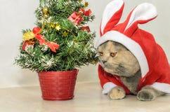 Γάτα Χριστουγέννων που ντύνει επάνω στο κόκκινο κοστούμι κουνελιών Στοκ Φωτογραφίες