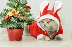 Γάτα Χριστουγέννων που ντύνει επάνω στο κόκκινο κοστούμι κουνελιών Στοκ Εικόνες