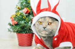 Γάτα Χριστουγέννων που ντύνει επάνω στο κόκκινο κοστούμι κουνελιών Στοκ εικόνα με δικαίωμα ελεύθερης χρήσης