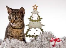 Γάτα, Χριστούγεννα, παρόν Στοκ Εικόνες
