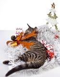 Γάτα, Χριστούγεννα, παρόν Στοκ φωτογραφία με δικαίωμα ελεύθερης χρήσης