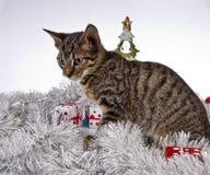 Γάτα, Χριστούγεννα, παρόν Στοκ Φωτογραφία
