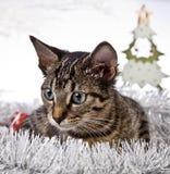 Γάτα, Χριστούγεννα, παρόν Στοκ εικόνες με δικαίωμα ελεύθερης χρήσης