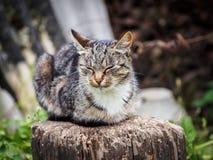 Γάτα χώρας Στοκ Φωτογραφία