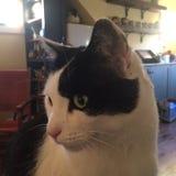 γάτα όμορφη Στοκ εικόνα με δικαίωμα ελεύθερης χρήσης