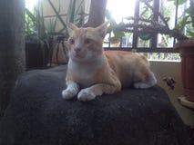Γάτα όμορφη Στοκ Εικόνες