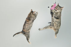 γάτα δύο Στοκ φωτογραφία με δικαίωμα ελεύθερης χρήσης