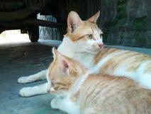 γάτα δύο Στοκ φωτογραφίες με δικαίωμα ελεύθερης χρήσης