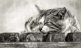 Γάτα ύπνου έξω Στοκ Φωτογραφία