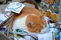 Γάτα ύπνου για δύο ευρώ Στοκ Φωτογραφία