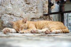 Γάτα ύπνου που βρίσκεται σε ένα βήμα σε έναν ναό στοκ φωτογραφίες