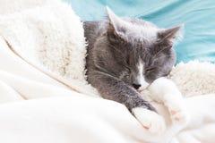 Γάτα ύπνου στο κρεβάτι Στοκ Εικόνες