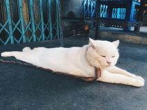 Γάτα ύπνου Στοκ Φωτογραφίες