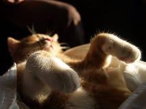 Γάτα ύπνου Στοκ εικόνες με δικαίωμα ελεύθερης χρήσης