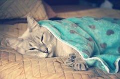 Γάτα ύπνου Στοκ Εικόνα